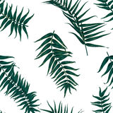 Seamless tropical pattern, exotic background with palm tree branches, leaves, leaf, palm leaves. endless texture Royalty Free Stock Images