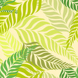 Seamless tropical pattern with fern leaves, palm fronds. Bright summer time background for use in design, web site. Seamless tropical pattern with fern leaves Royalty Free Stock Image