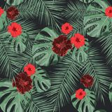 Seamless tropical  pattern with hibiscus flowers and exotic palm leaves. Seamless tropical  pattern with hibiscus flowers and exotic palm leaves on dark Stock Photo