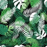 Seamless tropical pattern with palm leaves. Stock Image