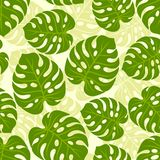 Seamless tropical pattern with stylized monstera Stock Image