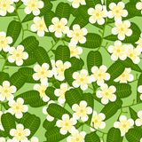 Seamless tropical pattern with stylized plumeria Stock Photos