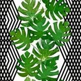 seamless tropiskt för modell Gröna monsterasidor på en vit bakgrund med svarta band Royaltyfri Fotografi