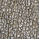 Seamless trunk tree texture Royalty Free Stock Images