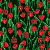Seamless tulips pattern on black Royalty Free Stock Photo