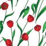 Seamless tulips pattern on white Royalty Free Stock Photos