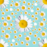 Seamless  turquoise background with chamomile Royalty Free Stock Photography