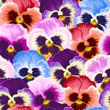 Seamless varicolored pansies Royalty Free Stock Photos