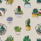 Seamless with various hand drawn succulent and cactus plants on white background. Colorful pattern. Royalty Free Stock Photo