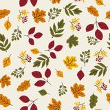 Seamless vector autumn pattern with red and orange berries and leaves. Fall colorful floral background. Elegant floral Royalty Free Stock Images