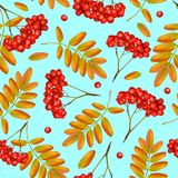 Beautiful greeting card. Seamless vector autumn pattern with rowan branch, orange leaves and red berries on blue background. Realistic 3d mesh rowan branch Stock Images