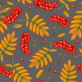 Seamless vector autumn pattern. Seamless vector autumn pattern with rowan branch, orange leaves and red berries on grey background. Realistic 3d mesh rowan Stock Photo