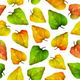 Seamless vector background, colorful autumn leaves Royalty Free Stock Images