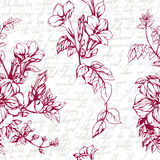 Seamless vector background with drawings of blossom garnet. And calligraphy vintage text Stock Photography