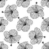 Seamless vector background, outline hibiscus flowers on white background.  Royalty Free Stock Photo