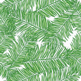 Seamless vector background palm leaves Stock Images