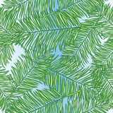 Seamless vector background palm leaves Royalty Free Stock Photo