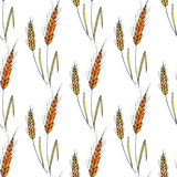 Seamless vector background with wheat spikelets. Royalty Free Stock Images