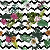Seamless vector botanical illustration. Tropical leaves. Botanical illustration. Tropical leaves and flowers Stock Photos
