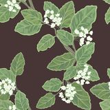 Seamless vector floral pattern Stock Images