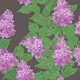 Seamless vector floral pattern Royalty Free Stock Photography