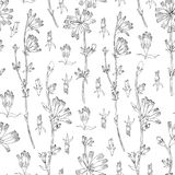 Seamless vector floral pattern, Chicory flower hand drawn graphic botanical illustration, doodle sketch isolated on. White background, medical endive plant line royalty free illustration
