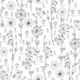 Seamless vector floral pattern Chicory flower hand drawn ink botanical illustration, doodle sketch isolated on white. Background, medical endive plant line art stock illustration