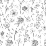 Seamless vector floral pattern, Chicory flower, medical endive field plant, Red clover, shamrock hand drawn illustration. Doodle sketch  on white background Stock Images