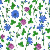 Seamless vector floral pattern, Chicory flower, medical endive field plant, Red clover, shamrock hand drawn illustration. Doodle sketch isolated on white Royalty Free Stock Photos