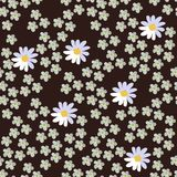 Seamless vector floral pattern on dark brown background. Daisies and yarrow. Beautiful light flowers vector illustration