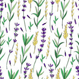 Seamless vector floral pattern, hand drawn colorful Lavender flower, decorative texture, sketch isolated on background Royalty Free Stock Photography