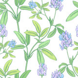 Seamless vector floral pattern. Royalty Free Stock Photos