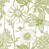 Seamless vector floral pattern. Illustration of wild field flowers buttercups, alfalfa, bell, chamomile on a white background. Vector seamless pattern. Floral Royalty Free Stock Image