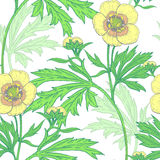 Seamless vector floral pattern. Illustration of wild field flowers buttercups on a white background. Vector seamless pattern. Floral ornament. Vintage Royalty Free Stock Photography