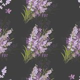 Seamless vector floral pattern with lavender flowers royalty free stock photography