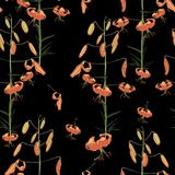 Seamless vector floral pattern. Orange branch of lilies flowers on a black background. Tropical illustration. Jungle foliage royalty free illustration