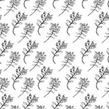 Seamless vector herbal pattern, Hand drawn Thyme branch with leaves sketch isolated on color background, Healing herb Stock Photo