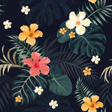 Night tropical pattern seamless black background. Seamless vector illustration of a night jungle, tropical leaves, hibiscus flowers, tropical plant wallpaper, a Stock Photography