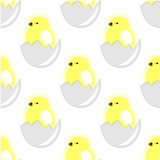 Seamless vector pattern with animals, cute background with chiсkens in the shell, over white backdrop Stock Photos