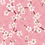 Seamless vector pattern of blossoming apple branches Royalty Free Stock Image