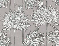 Seamless vector pattern with chrysanthemum. Stock Images