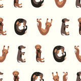 Seamless vector pattern - dachshund dog Stock Image