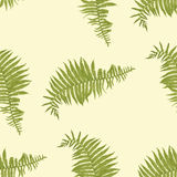 Seamless vector pattern with fern leaves Stock Image