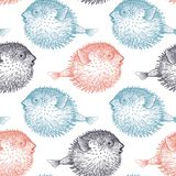 Fish hedgehog on white background seamless pattern. Seamless vector pattern with fish hedgehog under water. Sea bottom and animals. Vintage engraving art. Hand royalty free illustration