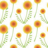 Seamless vector pattern with flowers. Background with orange dandelions and leaves on the white backdrop Royalty Free Stock Image