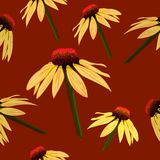 Seamless VECTOR pattern: flowers on brown, echinacea sketch. Royalty Free Stock Photo
