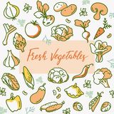 Organic vegetable vector illustration with a place for text or lettering in the pattern. In flat style. royalty free illustration