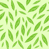 Seamless vector pattern with green tea leaves Royalty Free Stock Images
