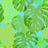 Seamless vector pattern of greenery leaves Monstera. Exotic tropical repeat ornament. Royalty Free Stock Photo