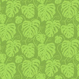 Seamless vector pattern of greenery leaves Monstera. Exotic tropical repeat ornament. Stock Image